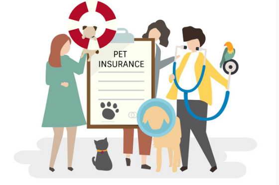 best for pet insurance