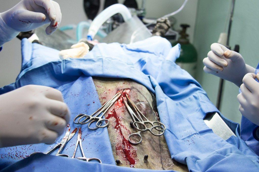 la chirurgie, vétérinaire, patient